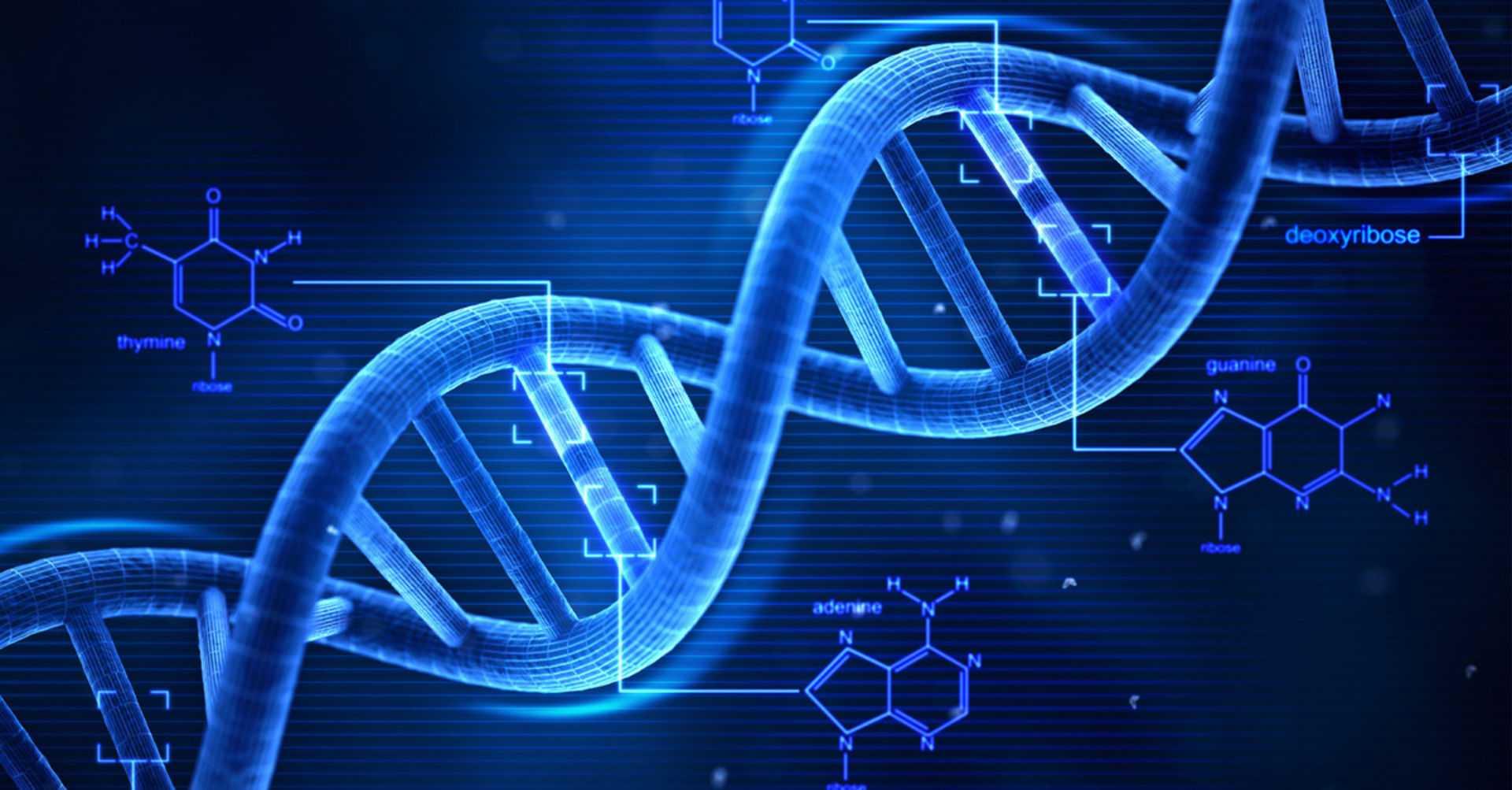 ДНК: ТОП 10 научных открытий