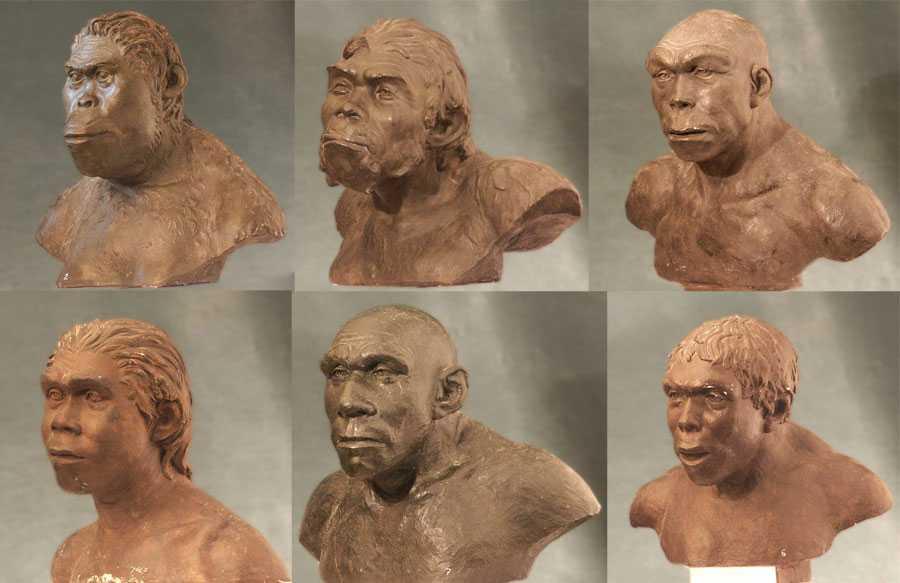 Теория эволюции: 10 научных открытий