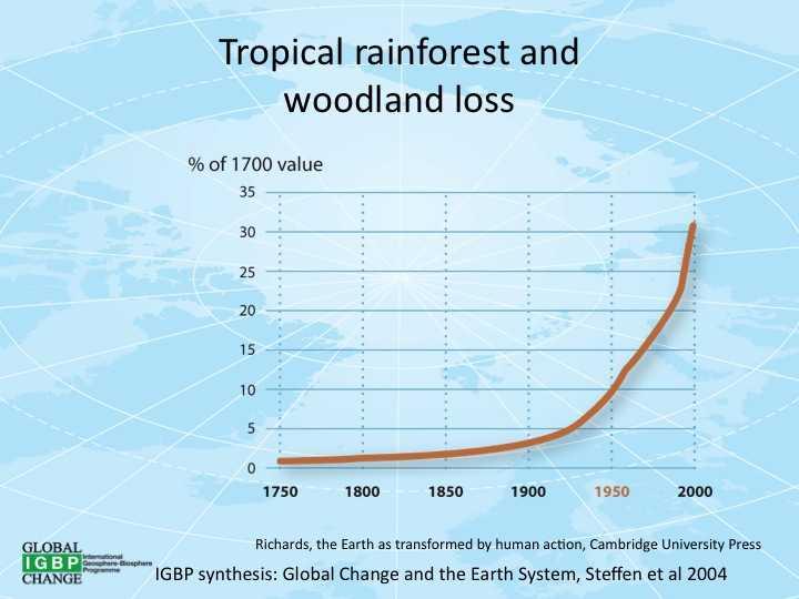 Вырубка лесов и потребление: как не потерять планету