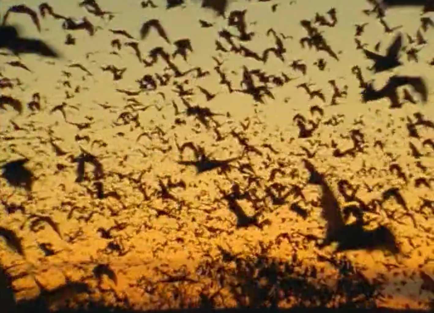 Дикая Австралазия: документальные фильмы о дикой природе