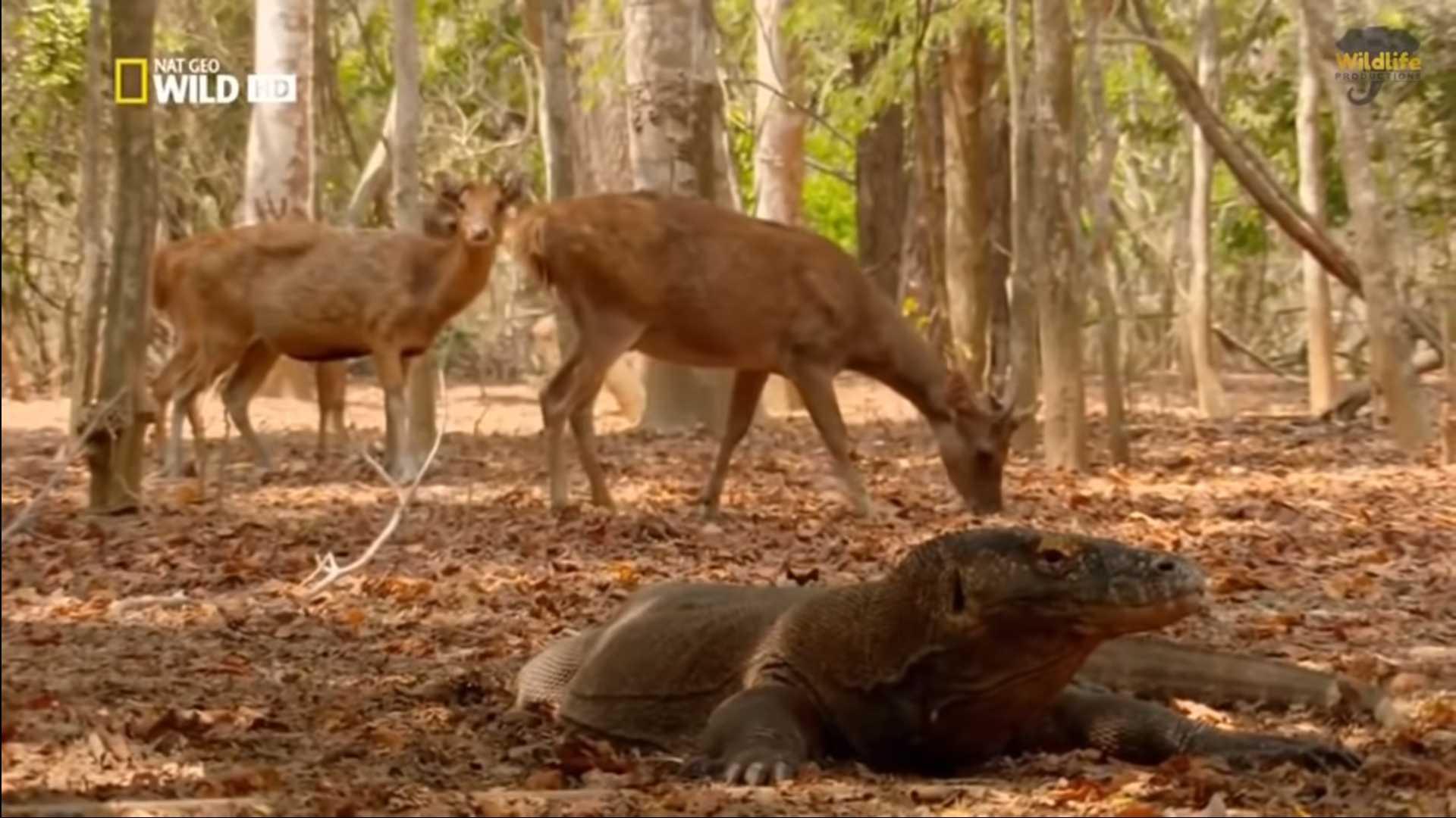 Дикая природа Индонезии: ТОП 10 документальных фильмов о природе