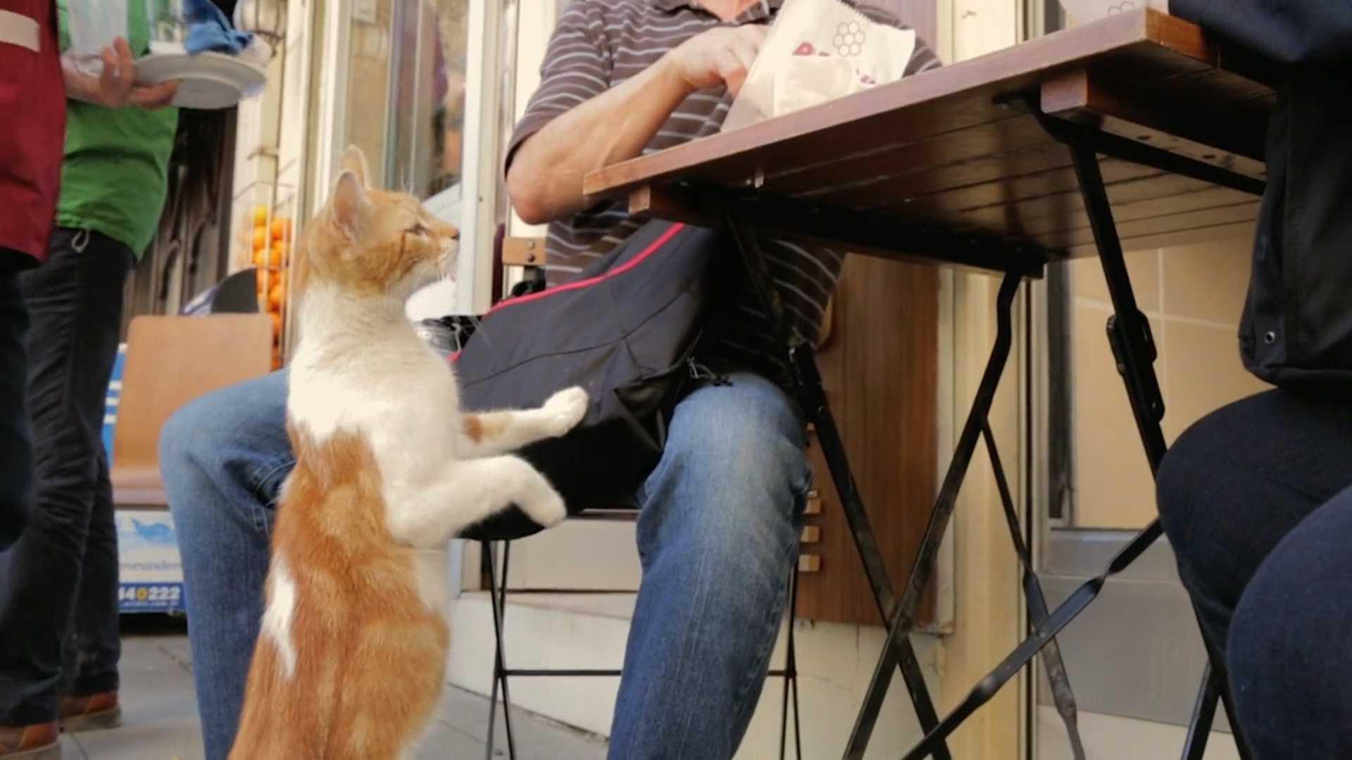 Город кошек: документальные фильмы про живую природу