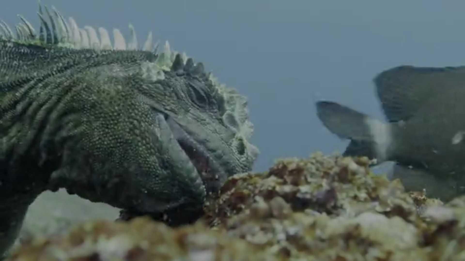 Планета Земля: фильмы о живой природе и животных