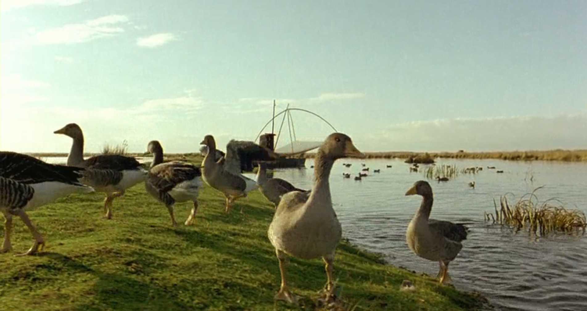 Птицы: лучшие документальные фильмы о природе