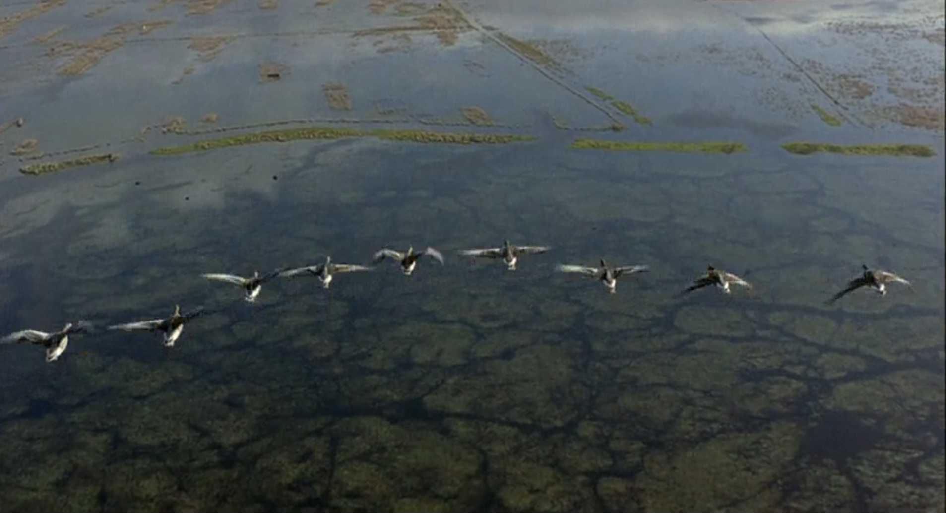 Птицы: документальные фильмы о природе