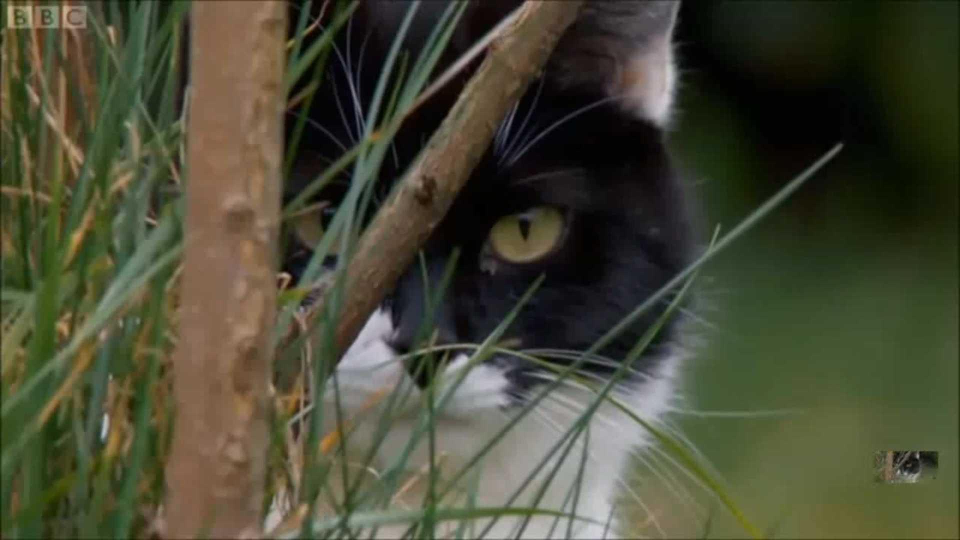 Фильм Тайная жизнь кошек 2013