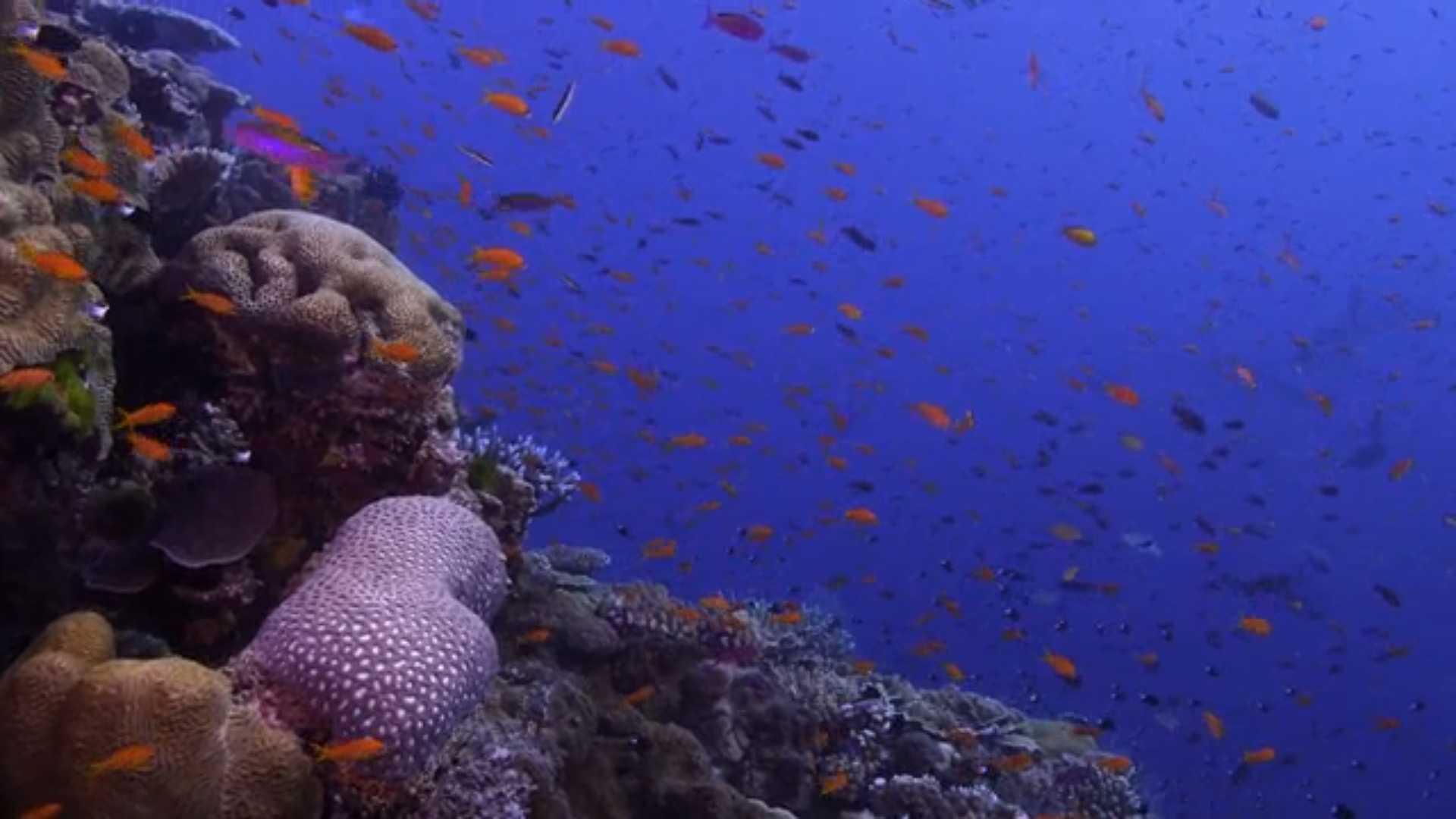 В поисках кораллов: смотреть документальный фильм